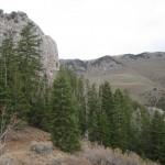 Schell Creek 3